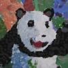 olivivias-panda