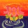 sophia-lotus